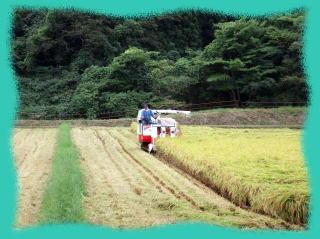 岩手県北上市相去町、安全な無農薬米、新米の収穫