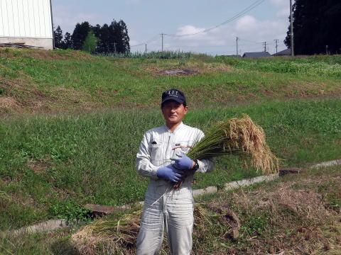 ファーム佐藤、佐藤健一、無農薬米の収穫